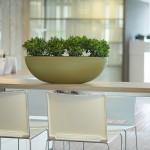 Amsterdam Planter with Crassula Plants