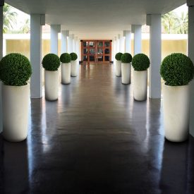Buxus Ball in ceramic planter
