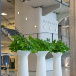 Chapeau Denmark Planter with Monstera Plants