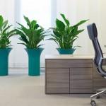 Chapeau Planter with Peace Lily Plants