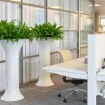 Chapeau Spain Planter with Asplenium plants