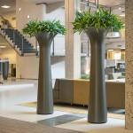 Chapeau Sweden Planter with Asplenium Plants