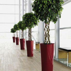 Delta 75 Ficus OB