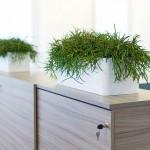 Multivorm Planter with Euphorbia Plants