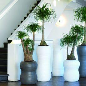 harmony planters