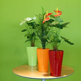 Piccadilly Funky Pot Collection